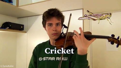 ヴァイオリニストが動物の鳴き声を演奏する05