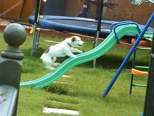 すべり台を登れない犬01