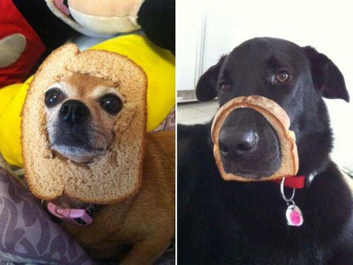 犬とパンの耳00