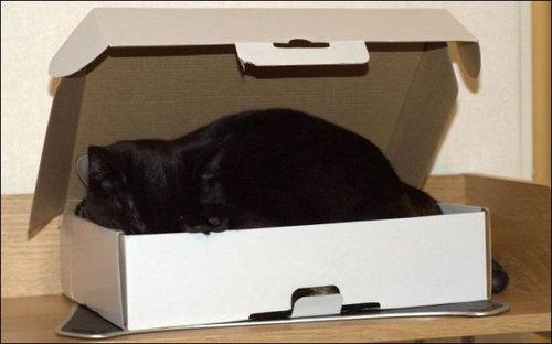 箱に入る猫03