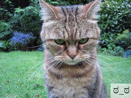 猫の顔文字22