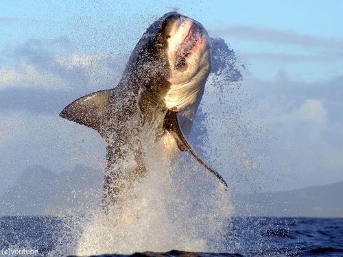 カナダに5mの巨大ザメ「海の女王」00