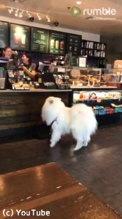 コーヒーショップのかわいいお客さん04