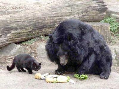熊と猫00