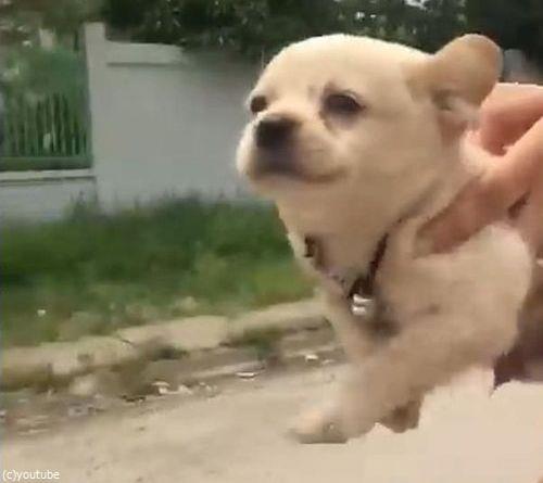 空飛ぶ子犬03