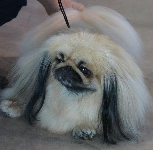 最も攻撃的な犬04