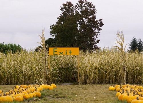 トウモロコシ畑の迷路の注意書き