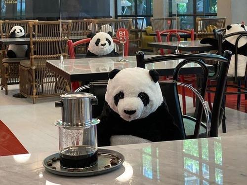 ベトナムのレストランがパンダのぬいぐるみ02