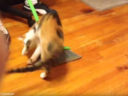 掃かれたい猫01