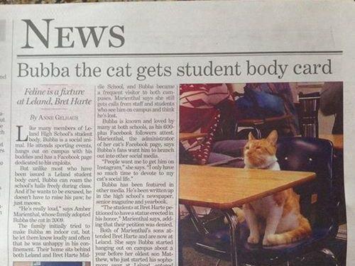 毎日高校に通う猫00