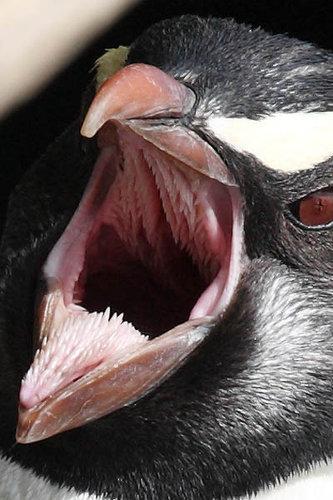 怖いペンギン04