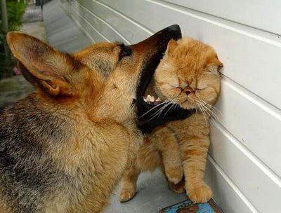 犬と猫の戦い05