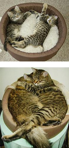成長した猫10