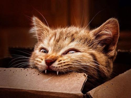 猫に襲われる人々11