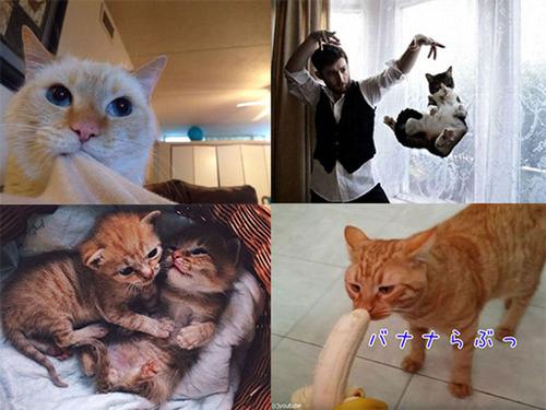猫の日まとめ00