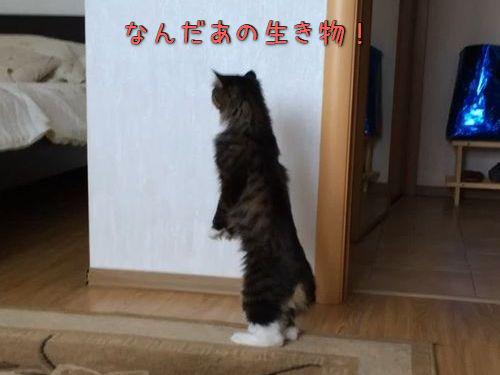 自分が猫であることを忘れる00