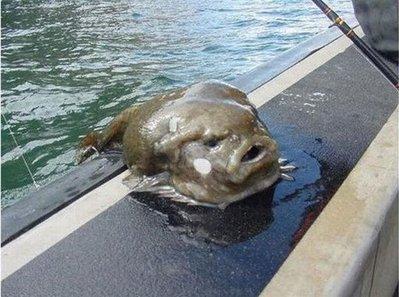 とんでもない魚01