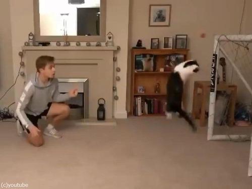 世界最高のゴールキーパー猫01