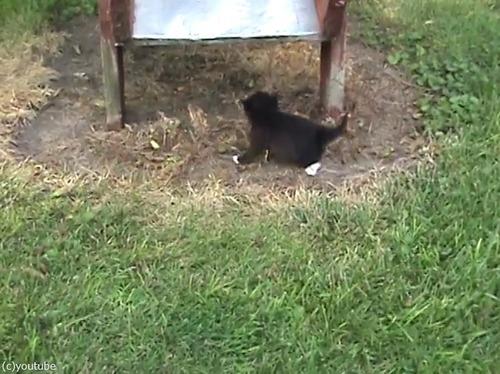 滑り台を落ちる子猫を助ける親猫…まさかのオチ05
