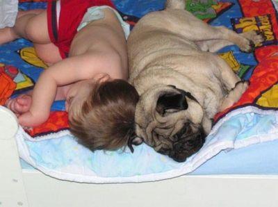寝てる犬09