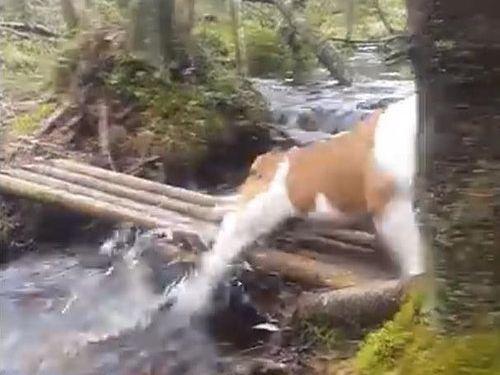 「ブルドッグ、がんばって橋を渡る」04
