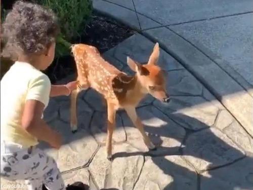 鹿の赤ちゃんが人間の赤ちゃんと出会った01