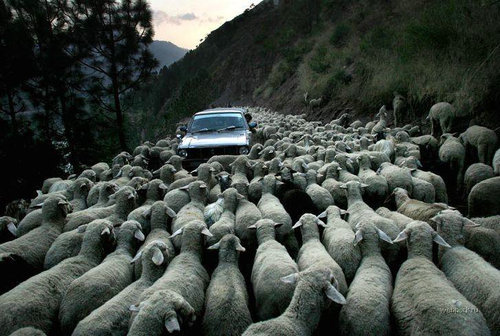 羊飼いの楽しみ09