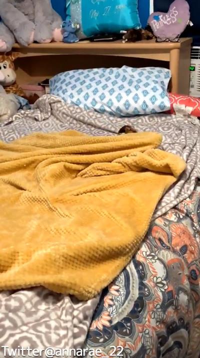 自分で毛布を掛けられるワンコ02