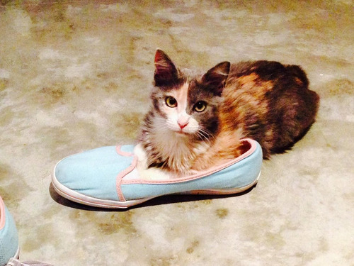 みすぼらしい猫がふさふさに03