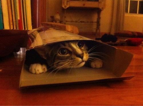 11箱や入れ物に収まった動物たち