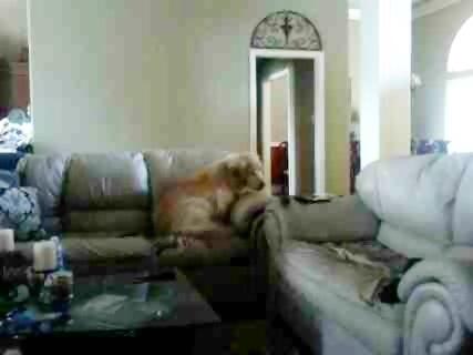 ソファで寝る犬02