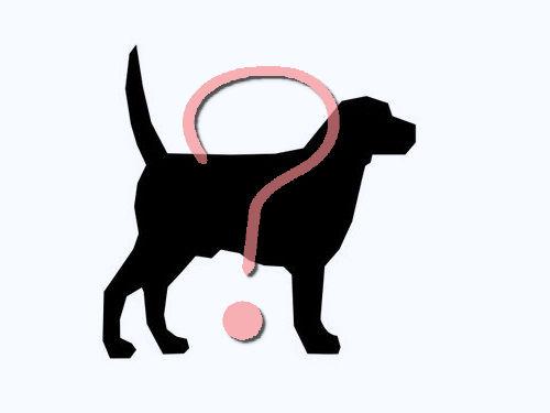 犬がどこへ行くのかよく理解したその瞬間00