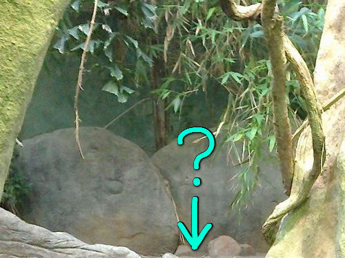 動物園で幸運な写真が撮れた00