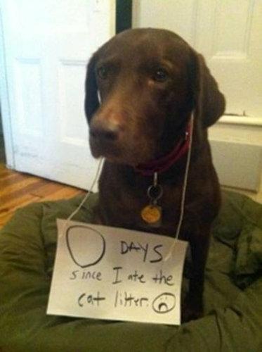 犬が教えてくれる助言05