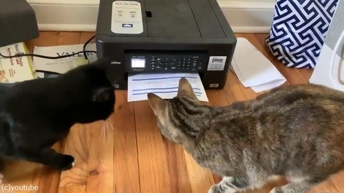 プリンターに興味津々な猫がかわいい04