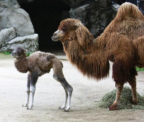 毛糸になる動物24