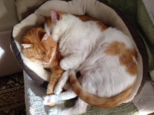 猫を2匹飼った理由06