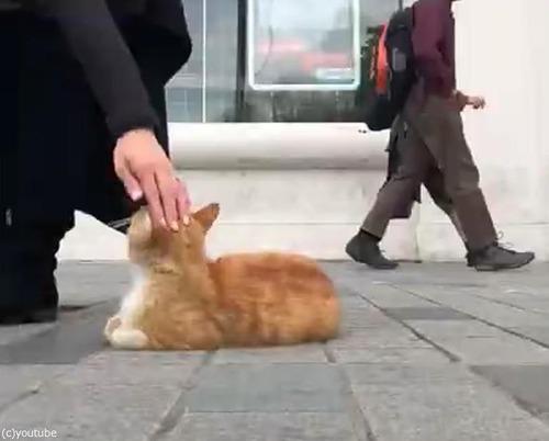イスタンブールの猫02