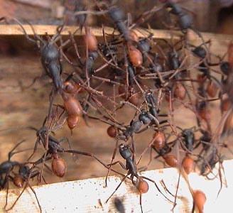 世界で最も危険な恐ろしい虫4-2