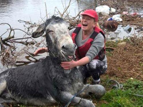 洪水から救出されたロバに笑顔09