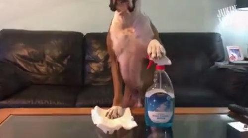 犬がマネキンチャレンジ03