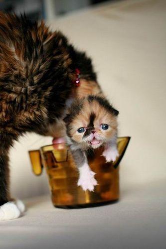 ぶさかわいい猫04