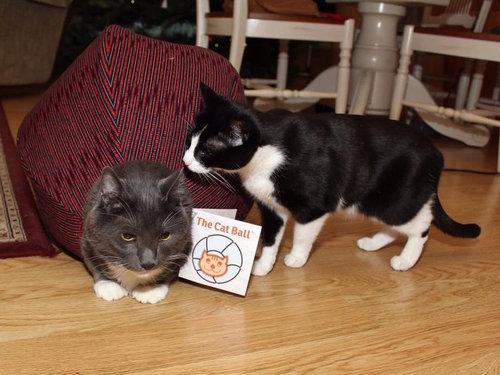 ダイエット猫05