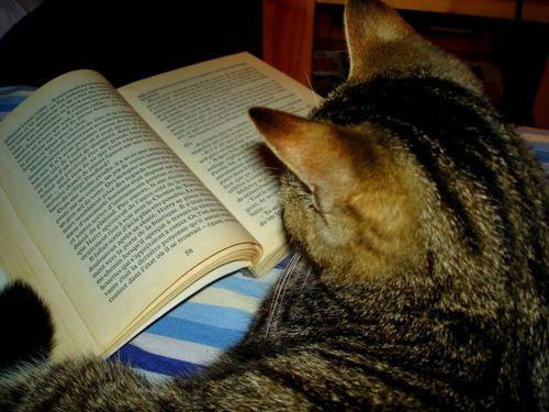 読書猫12