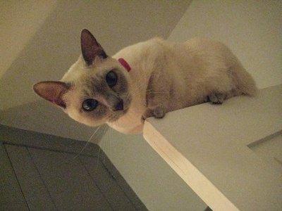 ドアの上の猫00