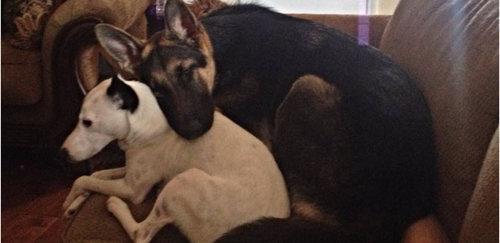 黒犬と白犬01