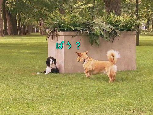 犬にドッキリ00