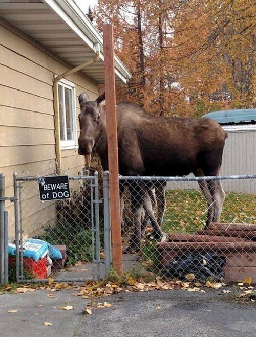 猛犬注意…と思ったら違う例12