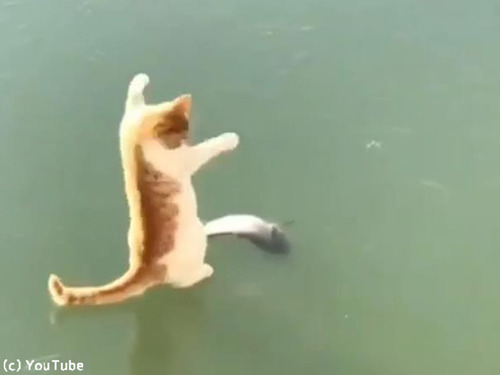 魚とれない猫00