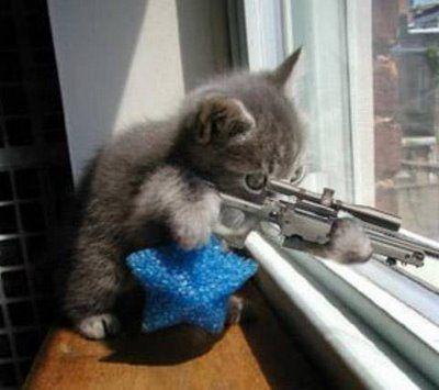 こんな猫はいやだ03